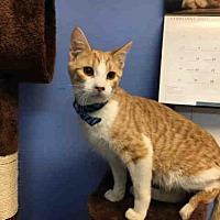 Adopt A Pet :: CLARK - Canfield, OH
