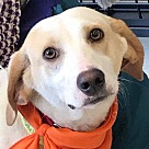 Adopt A Pet :: Hutch *Adopt or Foster*