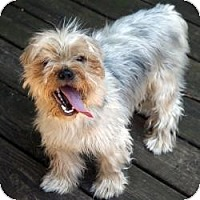 Adopt A Pet :: Baby Bear - Woodbridge, VA