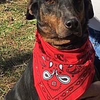 Adopt A Pet :: Maverick - Jefferson, TX