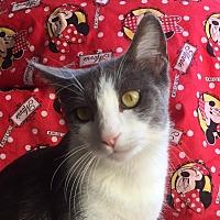 Adopt A Pet :: EDWARD - Santa Monica, CA