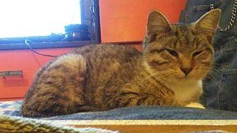 Adopt A Pet :: Shy  - Mt Vernon, IN
