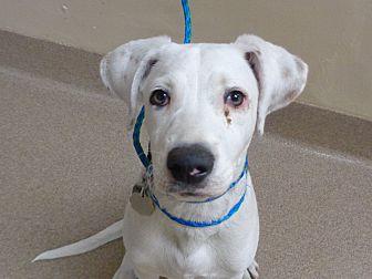 Adopt A Pet :: Leo  - Laramie, WY