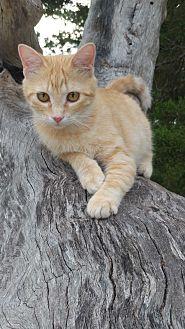 Adopt A Pet :: Rowan  - Fischer, TX