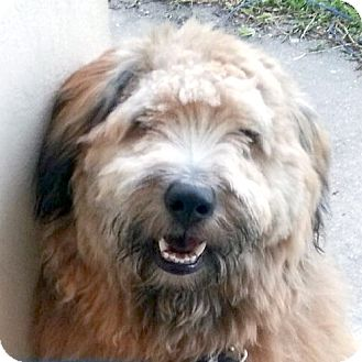 Dog Rescue Florida