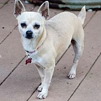 Adopt A Pet :: MISSY - Andover, CT