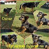 Yorkie, Yorkshire Terrier/Chihuahua Mix Dog for adoption in Centreville, Virginia - Oscar - needs foster