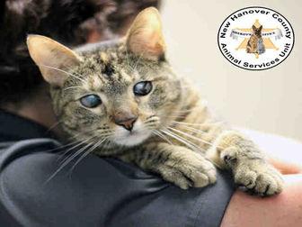 Adopt A Pet :: MARBLES  - Wilmington, NC