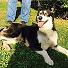 Adopt A Pet :: Liz