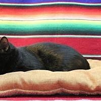Adopt A Pet :: Shelby - Sebastian, FL