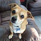 Adopt A Pet :: Tyler