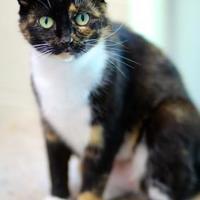 Adopt A Pet :: Malia - Charleston, SC
