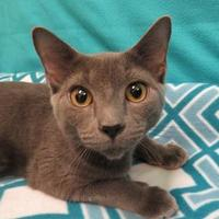 Adopt A Pet :: Luke - Port Charlotte, FL