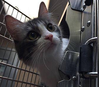 Adopt A Pet :: Sylvia  - Edmonton, AB