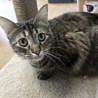 Adopt A Pet :: Olivia - Lake Charles, LA