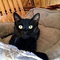 Adopt A Pet :: China - Sterling Heights, MI