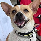 Adopt A Pet :: Pedro  *Adopt or Foster*