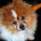Adopt A Pet :: Mink