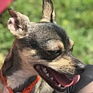 Adopt A Pet :: Anastasia