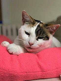 Adopt A Pet :: West  - Devon, PA