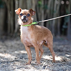 Available pets at Friends For Life Animal Shelter & Sanctuary in