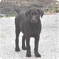 Adopt A Pet :: Petunia - Houston, TX