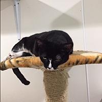 Adopt A Pet :: Merida - Ashland, OH