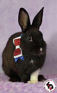 Adopt A Pet :: Clay  - Wilmington, NC