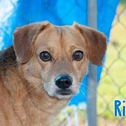 Dog People Of Livingston Parish Home Facebook
