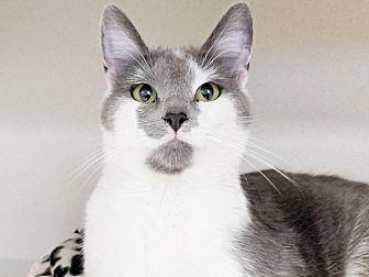 Adopt A Pet :: Demi  - Laramie, WY