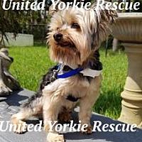 Adopt A Pet :: Ollie - Palm Coast, FL