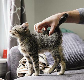 Adopt A Pet :: Johnny  - BROOKLYN, NY