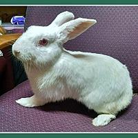 Florida White Mix for adoption in Williston, Florida - Gomer