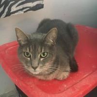 Adopt A Pet :: Ellie - Brooksville, FL