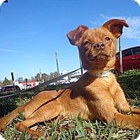 Adopt A Pet :: Cooper - Brooksville, FL