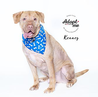 Adopt A Pet :: Kenney  - Houston, TX