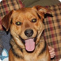 Adopt A Pet :: Drake - Marion, AR