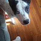 Adopt A Pet :: Rico