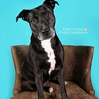 Adopt A Pet :: Sasha - Vienna, VA
