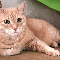Adopt A Pet :: Calvin - Lutherville, MD
