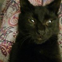 Adopt A Pet :: Jordan - Oviedo, FL