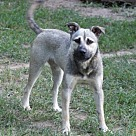 Adopt A Pet :: SILVER LADY