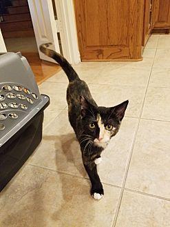 Adopt A Pet :: Churro  - Dallas, TX