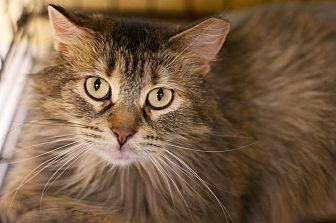 Adopt A Pet :: Marmo  - Troy, MI