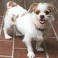 Adopt A Pet :: Sadie - Atlanta, GA