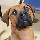 Adopt A Pet :: 26459 - Sheilah