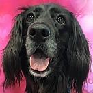 Adopt A Pet :: Peppa