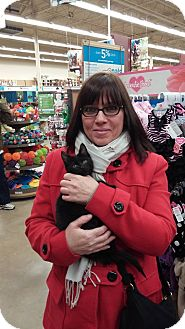 Domestic Shorthair Kitten for adoption in Warren, Michigan - Jimmy
