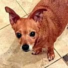 Adopt A Pet :: Chloe