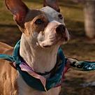 Adopt A Pet :: KORVA